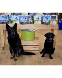 A German Shepard and Black lab sitting in front of pet food display